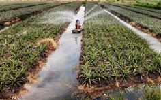 Tây Ninh hướng tới phát triển nông nghiệp công nghệ cao bền vững