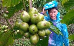 Hiệp hội cà phê Mỹ đánh giá cao cà phê Robusta của Việt Nam