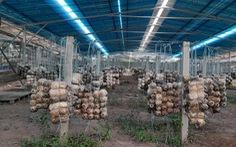 Nhiều vi phạm tại các dự án điện áp mái nông nghiệp