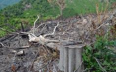Cả dàn lãnh đạo xã bị kỷ luật vì để lấn chiếm rừng