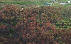 Lâm Đồng chỉ đạo điều tra vụ phá rừng theo kiểu 'công nghệ' mới