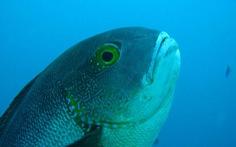 Phát hiện 'cụ' cá thọ nhất thế giới: 81 tuổi