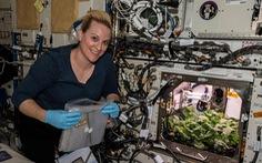Thu hoạch mẻ củ cải đầu tiên trồng ngoài không gian