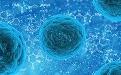 Các nhà khoa học tìm ra 'Gót chân Asin' của mọi loại virus
