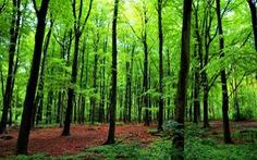 Mỗi em bé chào đời, Hungary trồng thêm 10 cây xanh để chống biến đổi khí hậu