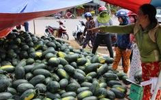 Hàng trăm tấn dưa hấu của nông dân ùn ứ vì dịch corona, thương lái trả giá 1.000 đồng/kg