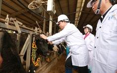 Nhập 4.500 con bò sữa cao sản HF từ Mỹ