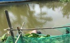 Hai người Trung Quốc tử vong ở Bạc Liêu nghi do ngạt nước