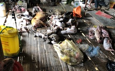 Bắt người đàn ông mua bán, tàng trữ động vật hoang dã số lượng lớn