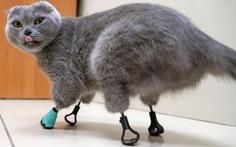 Mèo mất cả 4 chân vẫn đi lại, leo trèo nhờ 'phép màu' in 3D
