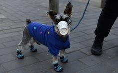 Hong Kong ghi nhận thêm một chú chó mắc bệnh COVID-19
