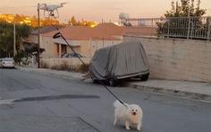 Chủ bị cách ly vì COVID-19, chó đi dạo cùng drone