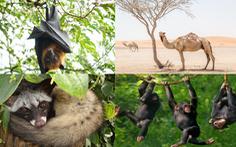 Những động vật hoang dã mang virus gây đại dịch