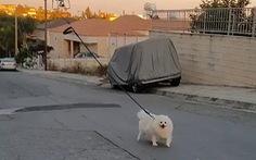 Dùng drone dắt chó đi dạo