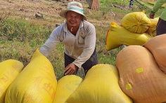 Xuất khẩu gạo: rà lại rồi tính tiếp