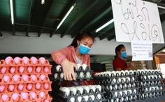 Sợ dịch COVID-19, dân Thái đi gom trữ trứng gà