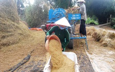 Xuất khẩu gạo nhưng có kiểm soát?