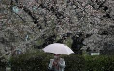 Dịch COVID-19 chiều 29-3: Mỹ hạn chế đi lại ở New York, Nhật tăng mạnh số ca nhiễm
