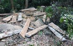 Yêu cầu khởi tố vụ lâm tặc xẻ gỗ ngay trong rừng phòng hộ đầu nguồn