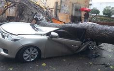 Hà Nội mưa như trút nước, cây lớn bật gốc đè bẹp ôtô