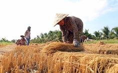 Hạn mặn khốc liệt ở miền Tây: 5 tỉnh công bố tình huống khẩn cấp