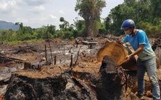 Rừng giáp ranh Gia Lai - Đắk Lắk đang bị tàn sát