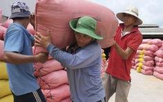 Sẽ xử lý doanh nghiệp khai khống để đăng ký hạn ngạch xuất khẩu gạo