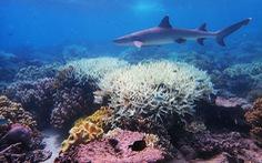 'Làm sáng mây' để cứu quần thể san hô Great Barrier