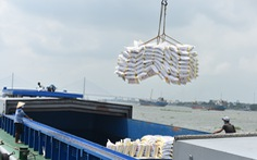 Được xuất khẩu gạo nhưng doanh nghiệp lo 'đã trễ cơ hội vàng'