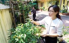 Xanh thêm những khu vườn trong phố