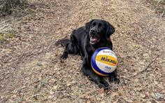 Cô chó nổi như cồn nhờ thi đấu bóng chuyền với VĐV chuyên nghiệp