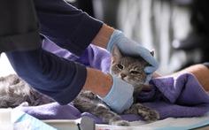 WHO sẽ điều tra sự lây nhiễm corona giữa người và thú nuôi