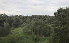 Long An chuyển gần 200ha đất rừng sang làm dự án điện mặt trời