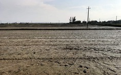 Cột điện đổ sập, một phụ nữ làm lúa chết giữa đồng vì điện giật