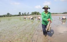 Nông dân đang nghèo hơn
