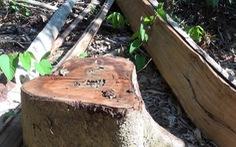 Chuyển hồ sơ 'lâm tặc mở đường giữa rừng đốn gỗ' sang cơ quan điều tra