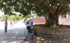 Người bắn khỉ tại chùa Linh Ứng cam kết không tái phạm