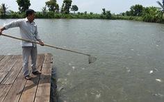 Đưa cá tra vào bữa ăn của người Việt
