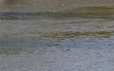 2 học trò tiểu học kêu cứu 3 bạn tắm sông bị chìm, bà con chạy ra không kịp