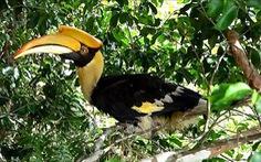 Thả chim phượng hoàng quý hiếm về rừng