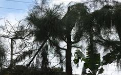 Cách chức hiệu trưởng điều học sinh chặt tỉa cây dẫn tới điện giật chết người