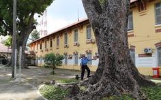 Cây đổ lộ ra thêm chuyện quản lý cây xanh trong trường học