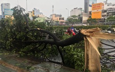 TP.HCM: Mưa lớn nước chảy như lũ trên phố, cây gãy cành đè người đi đường