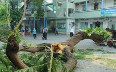 TP.HCM sẽ có quy chế quản lý, chăm sóc cây xanh trường học