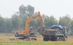 Nông dân bán lớp đất mặt ruộng: Thiệt hại lâu dài!