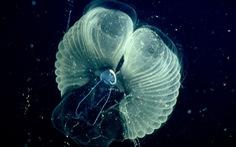 Những sinh vật khổng lồ lọc nước đại dương