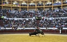 Thủ đô Colombia tiến dần tới mục tiêu cấm bộ môn đấu bò tót
