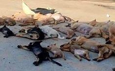 Bắt giữ 2 nghi phạm đánh bả trộm 30 con chó, mèo trong 1 đêm