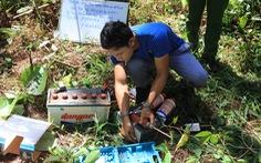 Truy tố cán bộ lâm nghiệp để kẻ gian hạ độc 10ha rừng thông