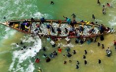 Săn lùng các đội tàu sát thủ đại dương - Kỳ 4: Tàn sát thủy sản giữa biển khơi